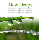 Dew drops close up — Stock Photo