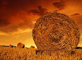 Straw bales — Stock Photo