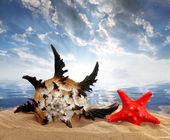Muschelschale mit Seestern — Stockfoto