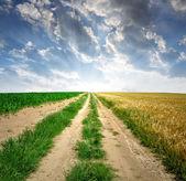 Field way — Stock Photo