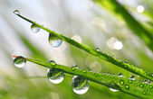 Dew drops — Stock Photo