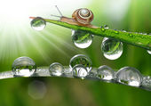 Snail on grass — Stock Photo