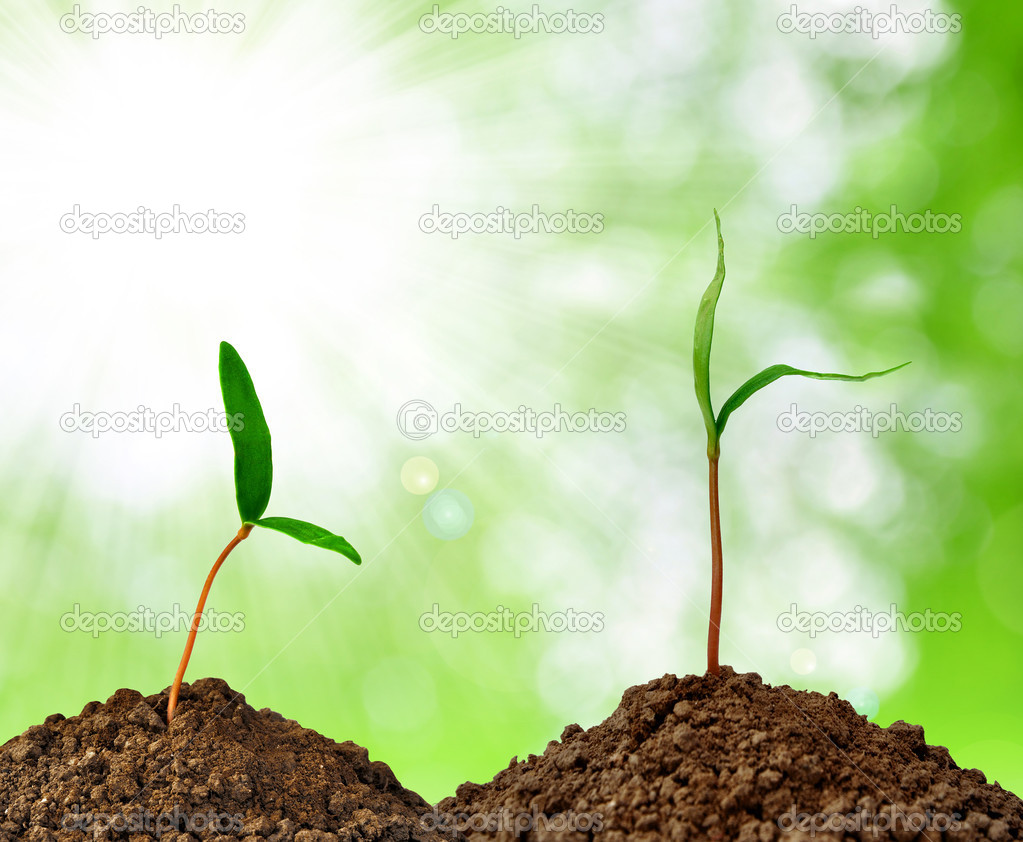 Growing green plant on green natural background  Stock Photo #9785626