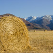Royalty-Free Stock Photo: Hay rolls in the field