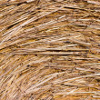 Hay roll, side view — Stock Photo