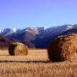 Hay rolls in the field with mountains — Stock Photo