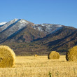 Hay rolls in the field — Stock Photo