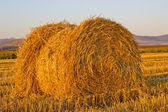 Hay bale in the field — Stock Photo