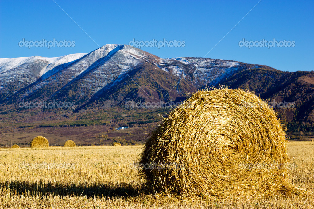 Hay in the field with high mountain on a background — Stock Photo #9236445