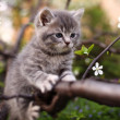 Adorable young cat in the tree — 图库照片
