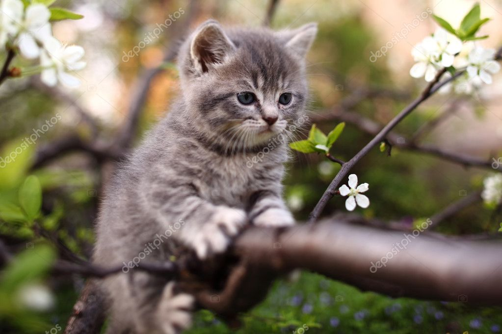 Adorable young cat in the green tree — Stock Photo #10658614