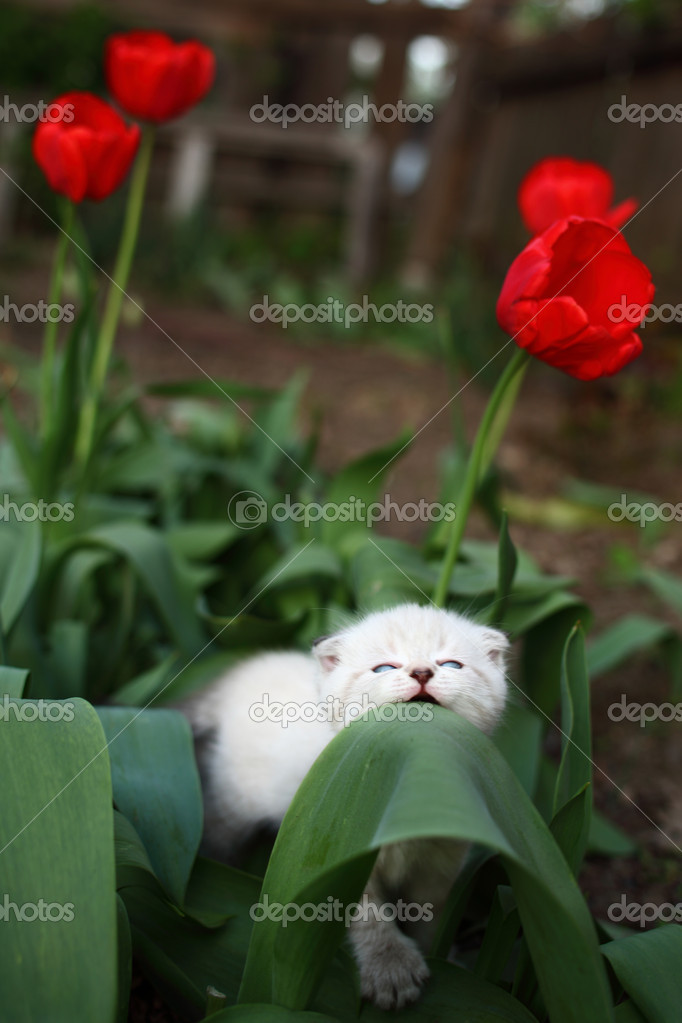 Adorable young cat in the green grass — Zdjęcie stockowe #10658622