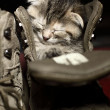 Stock Photo: Adorable little kitten sleeping inside a shoe