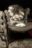 Adorable little kitten sleeping inside a shoe — Stock Photo