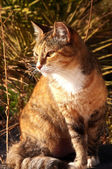 Gato lindo — Foto Stock