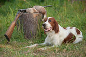 Setter and trophies and rifle on grass — Zdjęcie stockowe