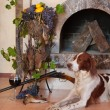 Stock Photo: Gun dog near to shot-gun, trophies and glass of wine against fireplace
