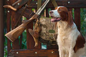 Gun dog near to shot-gun and trophy, outdoors — Stock Photo