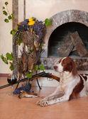 Chien de fusil près de fusil de chasse, trophées et verre de vin contre la cheminée — Photo