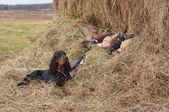 Successful bird shoot — Stock Photo