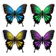 Colorful Butterflies — Stock Vector