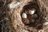Just hatched nestlings — Stock Photo