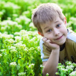Happy boy lying in the green grass — Stock Photo