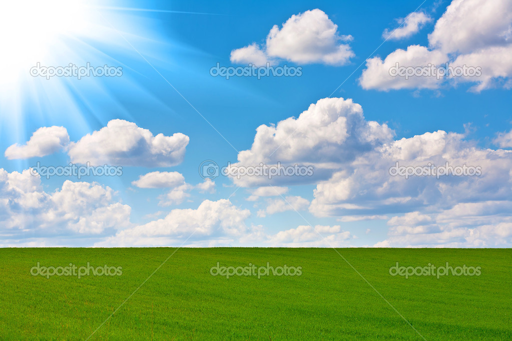Field of grass and perfect sky  Stock Photo #8083498