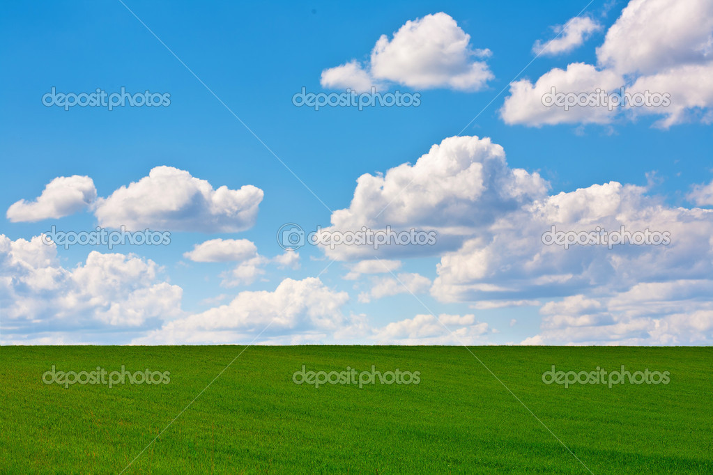 Field of grass and perfect sky  Stock Photo #8083567