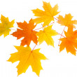 Autumn leaves - Stock Photo
