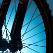 Stock Photo: Bicycle tire and spoke wheel