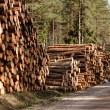 Logs stack — Stock Photo