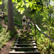 Forest stairs — Stock Photo #8126533