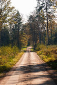 Forest road on a sunny autumn day — Stock Photo