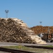 A pile of logs at the port ready for loading ships — Stock Photo