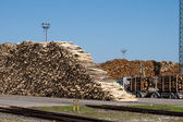 A pile of logs at the port ready for loading ships — Stockfoto