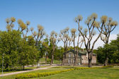 City park with strange trees — Stock Photo