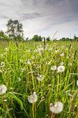 Summer field in evening — Stock Photo