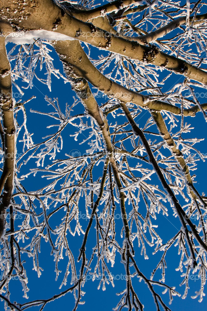 Frosty winter tree against blue sky — Stock Photo #9336697