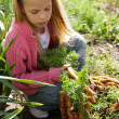 Girl in vegetable garden — Stock Photo