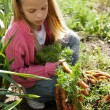 Girl in vegetable garden — Stock Photo #9356171