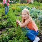 Girls working in vegetable garden — Stock Photo