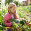 Young girls working in vegetable garden — Stock Photo