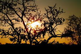 AMANECER EN AFRICA — Stock Photo