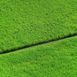 Aerial crops — Stock Photo #10187195