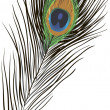 Vector of beautiful peacock feather - Stok Vektör