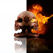 Heads Of Decay - Stockfoto