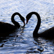 Love Birds On Swan Lake — Stock Photo