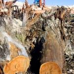 Environmental Destruction In Construction — Stock Photo