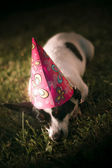 Partied Out Party Animal — Stockfoto